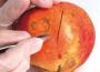 Plaies : les règles d'une bonne cicatrisation