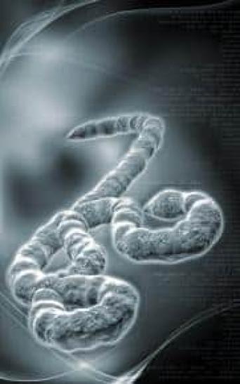 Ebola : les détails préoccupants de la prise en charge en Espagne