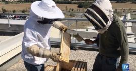 Carcassonne : L'abeille fait son miel de l'hôpital