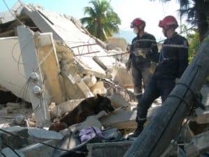 HAITI 2010 JFH Recherche par chien