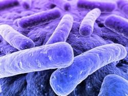 Résistance aux antibiotiques : l'OMS sonne l'alarme
