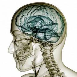 Un tiers des Européens souffrent de maladie mentale ou neurologique