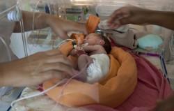 ©Natacha Soury. Repositionnement du bébé dans son nid,
