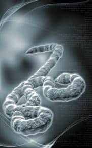 virus-Ebola_medium1-11