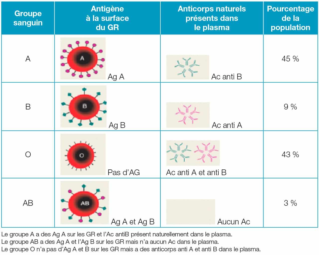 La transfusion sanguine et ses règles de compatibilité - Actusoins ...